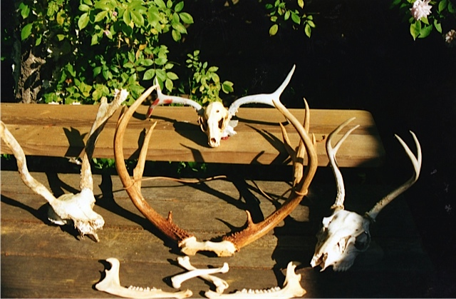 Part of his skull collection
