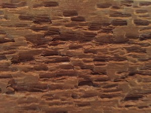 Photo of peck marks on a redwood wall in the house
